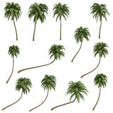 Coconut palms Royalty Free Stock Photography