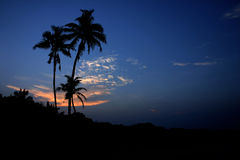 Coconut Palms. In a tropical island Stock Image