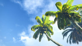 Coconut palms against blue cloudy sky Royalty Free Stock Photography