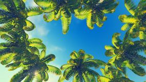 Coconut palms against blue sky. Frame made from palm treetops against blue sky background Royalty Free Stock Images