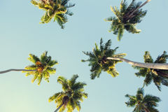 Coconut palms against the blue sky. Stock Photo