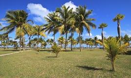 Coconut palms on the Atlantic coast. Cayo Guillermo. Cuba Royalty Free Stock Photography
