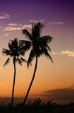 Coconut palms in bali tropic island Stock Photography