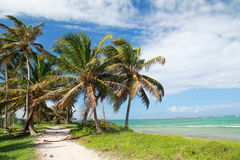 Coconut palms on beach Royalty Free Stock Photography