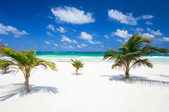 Coconut palms at beach Stock Images