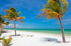 Coconut palms at beach. Coconut palms at tropical beach on Holbox island in Mexico Royalty Free Stock Images