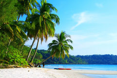 Coconut palms beach Stock Images