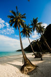 Coconut palms on the beach Royalty Free Stock Photography