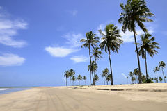 Coconut palms on the beach Stock Images