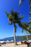 Veets, coconut palms, blue sky, sea, blue sky, rest royalty free stock photography