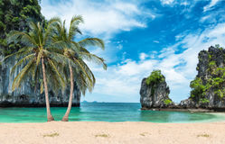 Coconut palms on the beach royalty free stock photo
