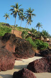 Coconut palms on the beach . Arambol, Goa Royalty Free Stock Photos