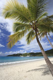 Coconut palms on a beach in the Caribbean Stock Photography