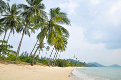 Coconut palms on the beach of a tropical island Stock Photo