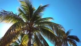 Coconut palms beach. Coconut palms on the beach of Varadero, Cuba resort stock video