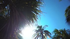 Coconut palms beach. Coconut palms on the beach of Varadero, Cuba resort stock footage
