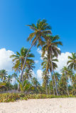 Coconut palms on beach Stock Photos