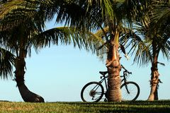 Coconut Palms and Bicycle. A bicycle rests against one of three coconut palm trees along a grassy path, against a pale blue sky Royalty Free Stock Photography