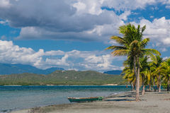 Coconut palms on Black Sand Beach, Caribbean Sea, Dominican Republic Stock Image