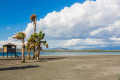 Coconut palms on Black Sand Beach, Caribbean Sea, Dominican Republic Royalty Free Stock Photo
