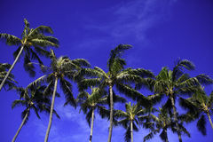 Coconut palms and blue skies Stock Photos