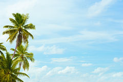 Coconut palms on blue sky background with a blank space for text Royalty Free Stock Photography