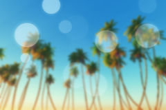 Coconut palms blur Royalty Free Stock Image