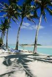 Coconut palms cast shadows on sand. Royalty Free Stock Photos
