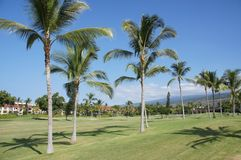 Coconut palms on golf course fairways Royalty Free Stock Photos