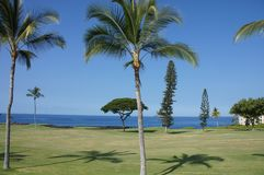 Coconut palms on golf course fairways Stock Photography