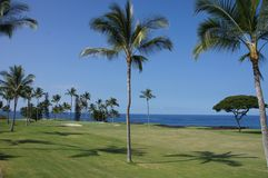 Coconut palms on golf course fairways Royalty Free Stock Images