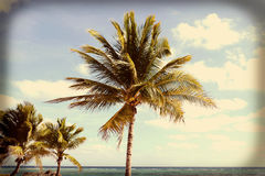 Coconut Palms Instagram Royalty Free Stock Photo