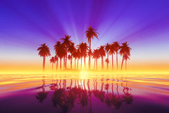 Coconut palms island Stock Image