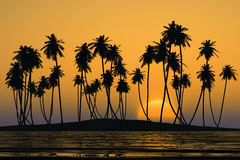 Coconut palms island. Coconut palms at yellow tropical sunset over calm sea Royalty Free Stock Image
