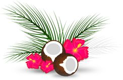 Coconut with palms leaves and hibiscus Stock Images