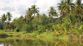 Coconut palms near the lake, Koh Chang island, Thailand stock video