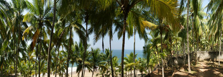 Coconut palms on the ocean shore Royalty Free Stock Image