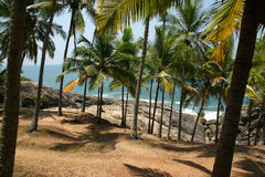 Coconut palms on the ocean shore Royalty Free Stock Photos