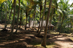 Coconut palms on the ocean shore Stock Photo
