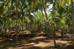 Coconut palms on the ocean shore Stock Photos