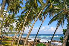 Coconut palms on the ocean shore Royalty Free Stock Images