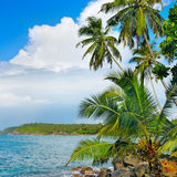 Coconut palms on  ocean shore Stock Images