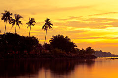 Free Coconut Palms On Sand Beach In Tropic On Sunset Royalty Free Stock Image - 12328676