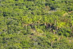 Coconut palms and other vegetation along the slopes of a tropical island, Fiji royalty free stock photo