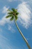 Coconut palms over blue sky background Stock Photos