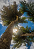 Coconut palms over blue sky background Royalty Free Stock Photography