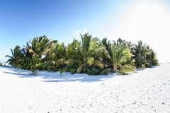 Coconut Palms on Pacific Island royalty free stock photo