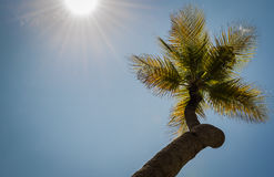 Coconut Palms Stock Photos