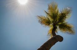 Coconut Palms Stock Photos