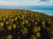 Coconut palms plantation in tropical island. Aerial view with palms. And ocean stock image